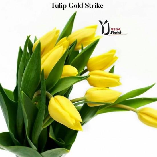 Tulip Gold Strike